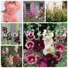 Big Sale! 200 Pcs New Double Hollyhock Flower Mixed Perennial Garden R