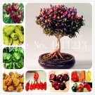 New Arrival 200 pcs Giant Spices Spicy Red Chili Hot Pepper Bonsai Pla