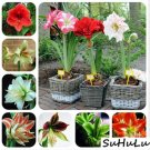 Hot sale 100 Pcs/Bag Amaryllis Bonsai Balcony garden Lily Plant and Bo