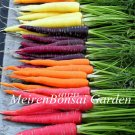 200 pcs Carrot vegetable fruit vegetable bonsai 9 colours to choose sw