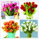 107PCS ,High grade Flower flores Garden Tulip plante Bonsai plantas Ba