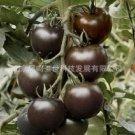Hot black jade black tomato bonsai organic vegetable bonsai 200pcs-in