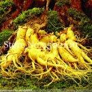 100 Pcs Chinese Ginseng Bonsai, Panax Ginseng Flores ,King Of Herbs Pl