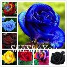 Bonsai Rrare Exotic 200 Pcs Rose Plants Rainbow Roses Bonsai Flowers f