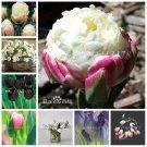 300 Pcs Multifarious Tulip Bonsai Flowers, Perennial Tulip Bonsai Gard