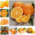 Cheap 100 pcs/ bag Edible Oranges Fruit Mandarin Bonsai Tree Citrus Po