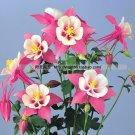 20pcs/pack Zi Yan Aquilegia Hardy Perennial Flower bonsai Shade Flower