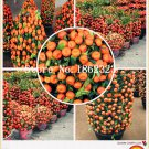 Bonsai 30 pcs Citrus plant Bonsai Mandarin Orange flores Edible Fruit