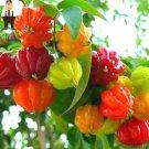 10Pcs Surinam Cherry bonsai Pitanga Fruit plants Brazilian Cherry Red