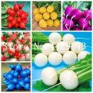 Cheap 50 Pcs Carrot Plant Blue Yellow Radish Bonsai Vegetables Plants
