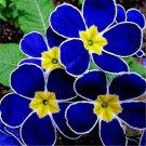 200 Pcs Rare Primrose Evening Grass Perennial Balcony Ornamental Plant