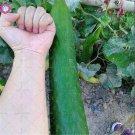 BONSAI 200pcs giant cucumber Organic edible vegetable planting potted
