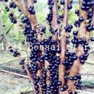 100 Pcs Delicious Fruit Plant Plinia Cauliflora Bonsai Tree Family Myr