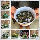 bonsai flower lotus flower for summer 100% real Bowl lotus pots Bonsai