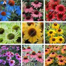 120 pcs Rare Japan Echinacea Purpurea bonsai beautiful daisy flower pl