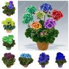 22 Color 50 Pcs/Bag Rainbow Geranium Bonsai Four Season Variegated Ger