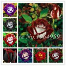 100pcs/lot  multi Colors Beautiful Rose Flower Bonsai Plant for Home g
