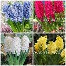 100pcs 2019 Spring New Exotic Hyacinthus Orientalis Plant Perennial  H