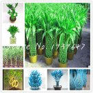 The New 2019! 50 Pcs/Pack Chinese Lucky Bamboo Plants, Giant Moso Bamb