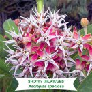 Time Limit!! 100 Pcs/Lot Showy Milkweed, Asclepias speciosa plant, Bea