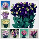 New! 200 pcs Bonsai Eustoma Perennial Flowering Plants Potted Flowers