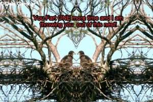 Two Bald Eaglets in the Nest Item 001,  8 x 12 Print