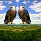 Two Bald Eagles on the Mountain Item 003, 20 x 30 Print