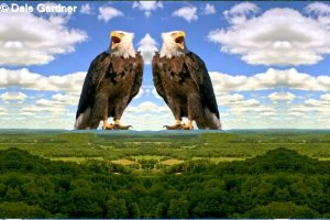 Two Bald Eagles on top of the Mountain Item 003, 16 x 24 Print
