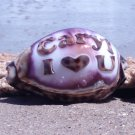 Personalized - 'I Love You' Engraved on Tiger Cowrie Seashell