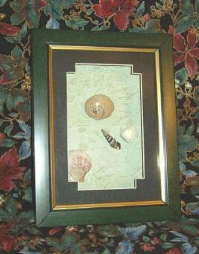 Sea Shells in Picture Frame ~ Brand New