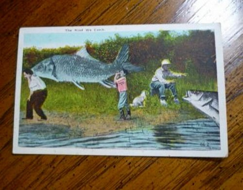 Fishermen and Giant Freak Fish Fishing Vntg Postcard Clean Unstamped Rare