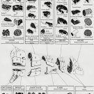 Beef Cuts Where they come from How to cook them Chart 13x19 inches Poster Print