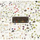 The Various Varieties of Vegetables Chart  18x28 inches Canvas Print