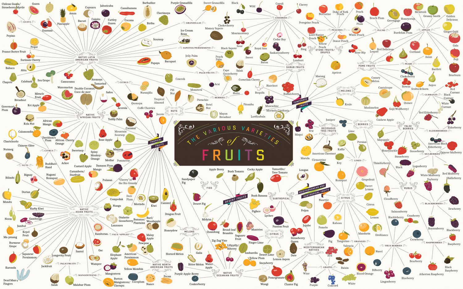 The Various Varieties of Fruits Chart   18x28 inches Canvas Print