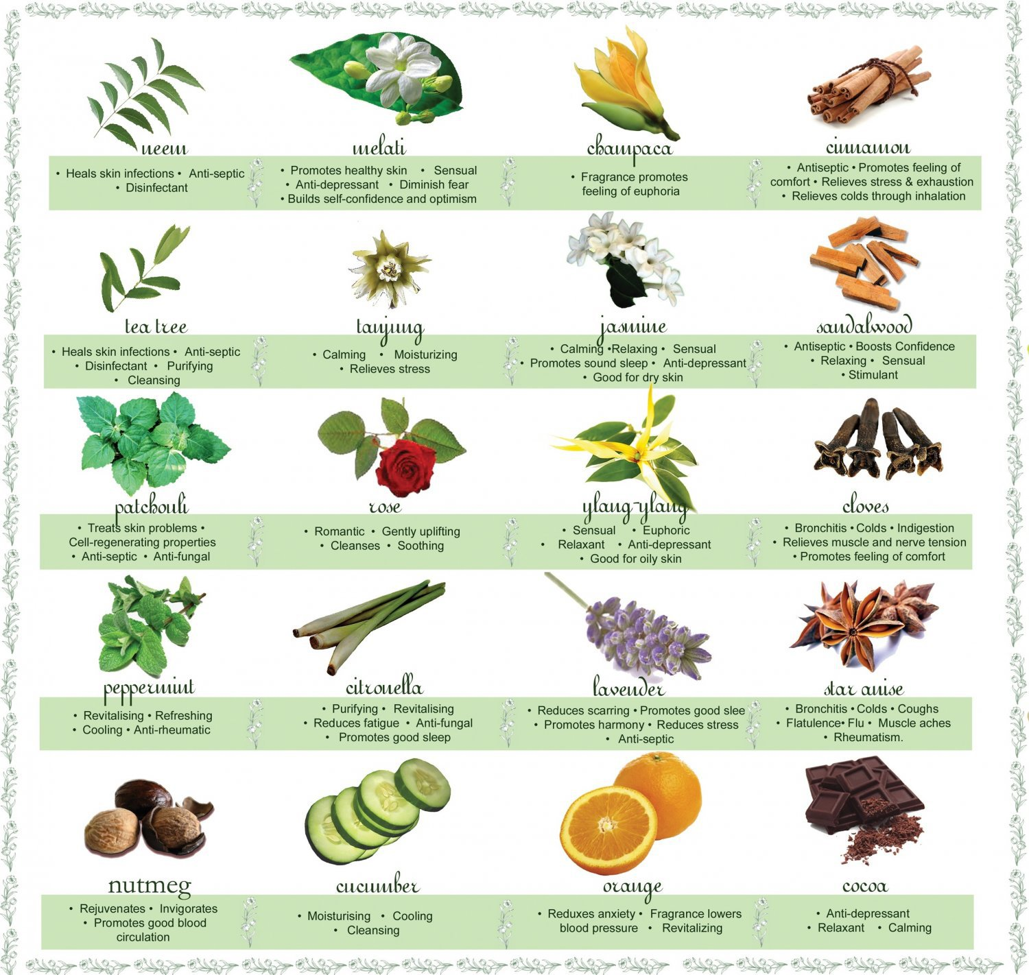 Essential Oils Chart  18x28 inches Poster Print