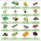 Essential Oils Chart   18x28 inches Canvas Print