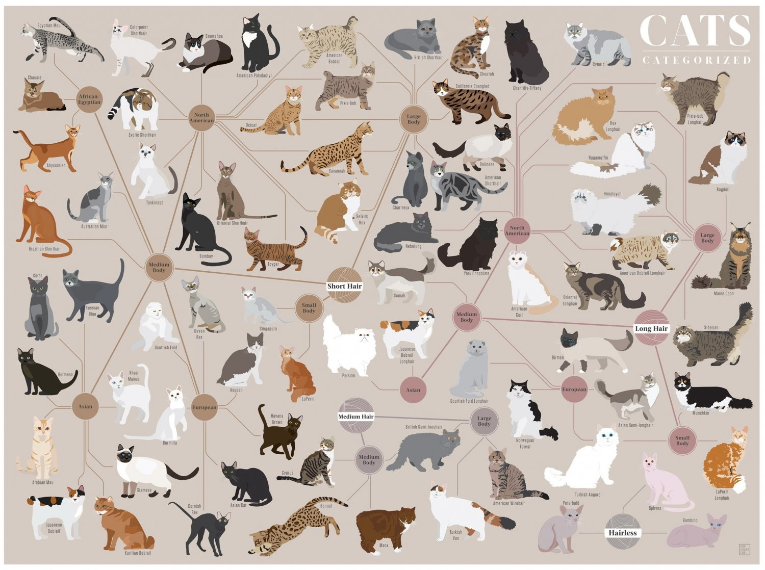 Cats Categorized Chart  18x28 inches Poster Print