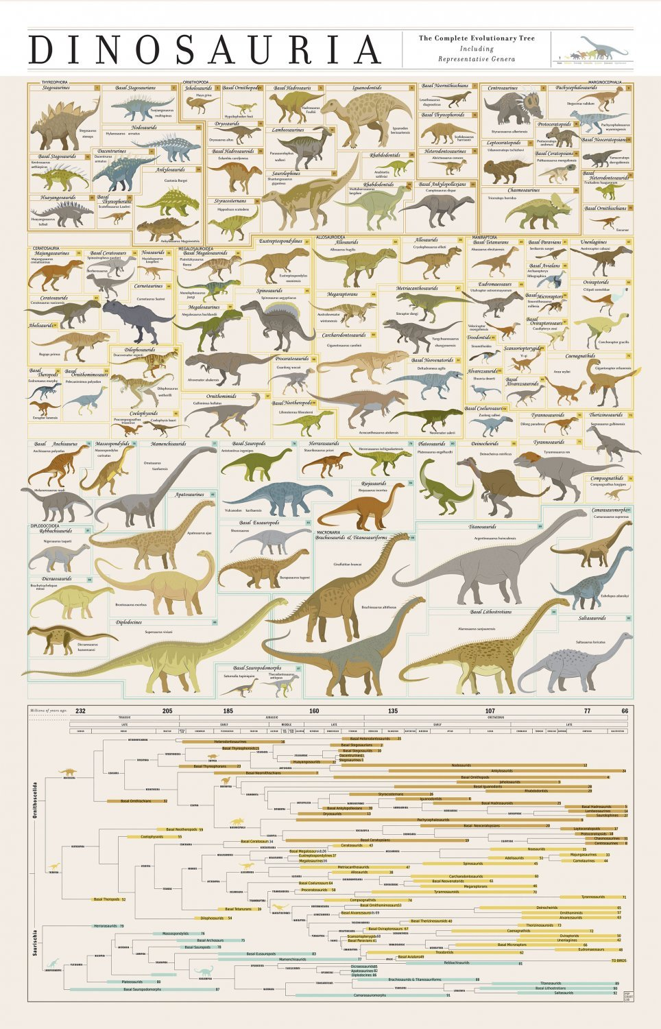 The Complete Evolutionary Dinosaur Tree Chart  18x28 inches Poster Print
