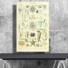 Types of Sea and Ocean Creatures, Adolphe Millot  24x35 inches Canvas Print