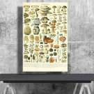 Types of Mushrooms, Adolphe Millot, Chart  18x28 inches Poster Print