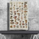 Types of Mushrooms, Adolphe Millot, Chart  18x28 inches Canvas Print