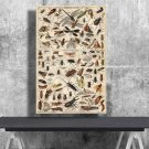 Types of Insects, Adolphe Millot, Chart  18x28 inches Canvas Print