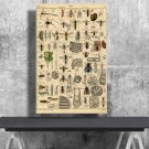 Types of Insects, Adolphe Millot, Chart  24x35 inches Canvas Print