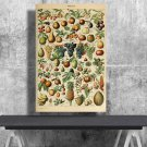 Types of Fruits, Adolphe Millot, Chart  18x28 inches Canvas Print