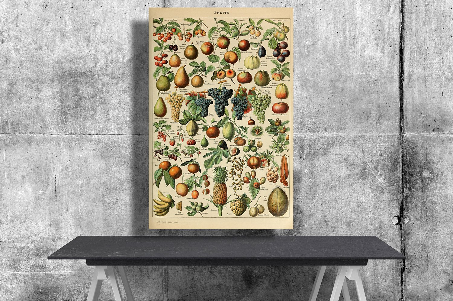 Types of Fruits, Adolphe Millot, Chart  24x35 inches Canvas Print