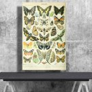 Types of Butterflies, Adolphe Millot, Chart  18x28 inches Poster Print