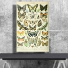 Types of Butterflies, Adolphe Millot, Chart  18x28 inches Canvas Print