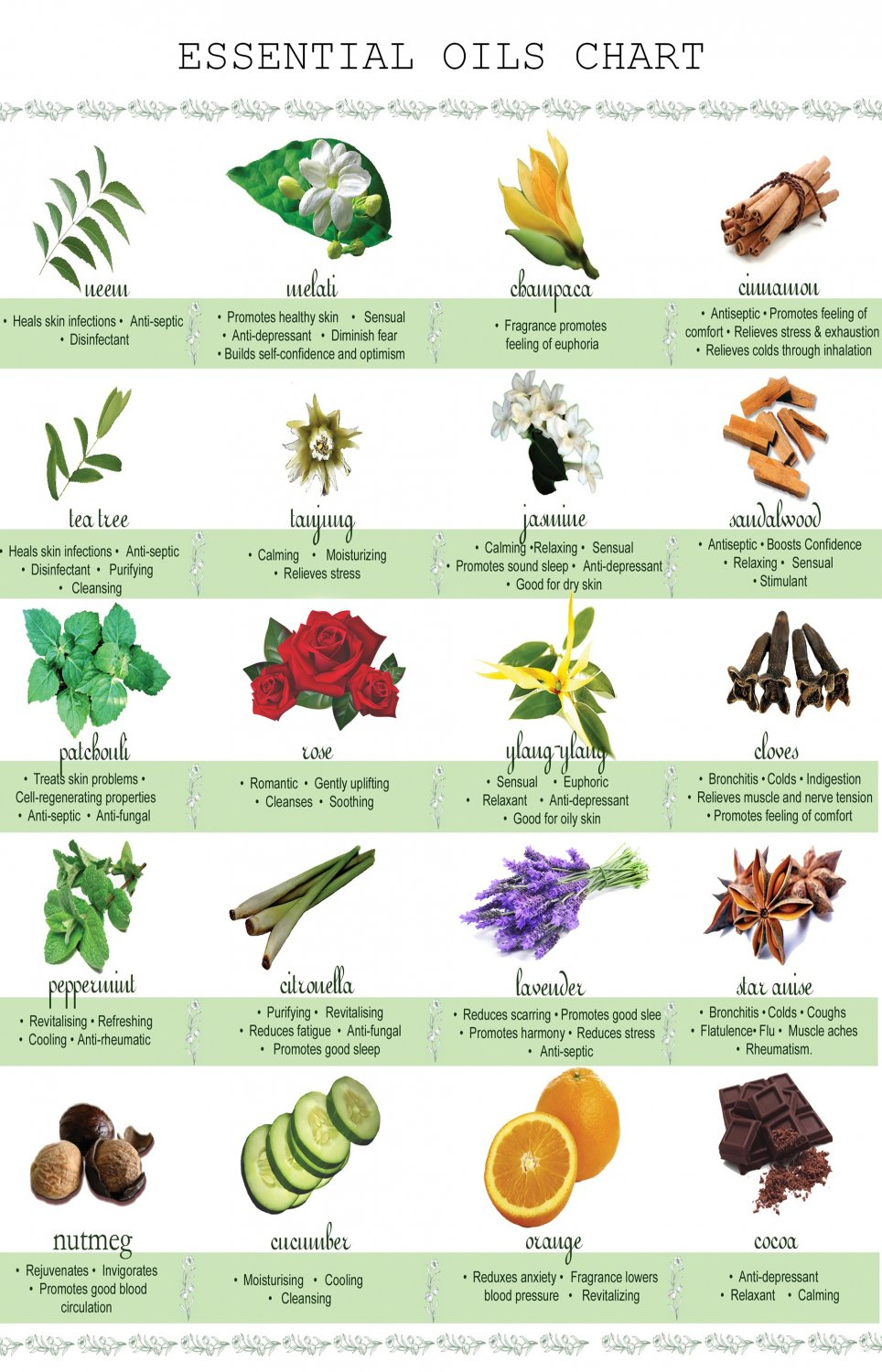 Essential Oil Chart  13x19 inches Poster Print