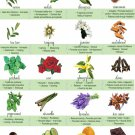 Essential Oil Chart 18x28 inches Poster Print