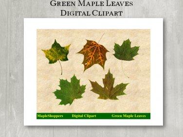 Green Maple Leaf Clipart Digital Leaf PNG Digital Images Realistic Maple Leaf Graphics Printables